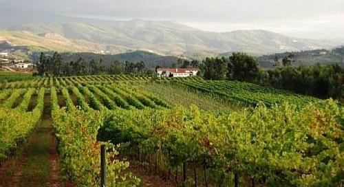 Quinta da Raza in Vinho Verde Country