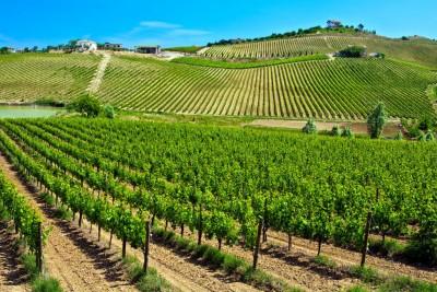 vineyards in abbruzzo