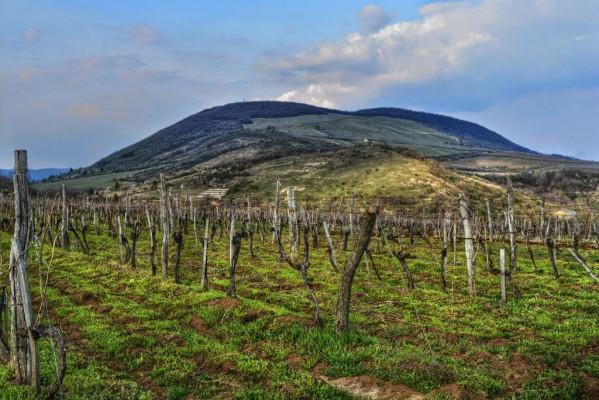 Nagy Eged Vineyard