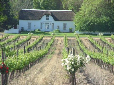 vineyard and cape house in stellenbosch