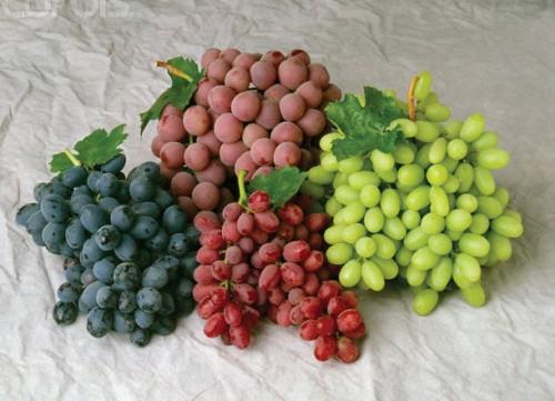 classic-grape-varieties