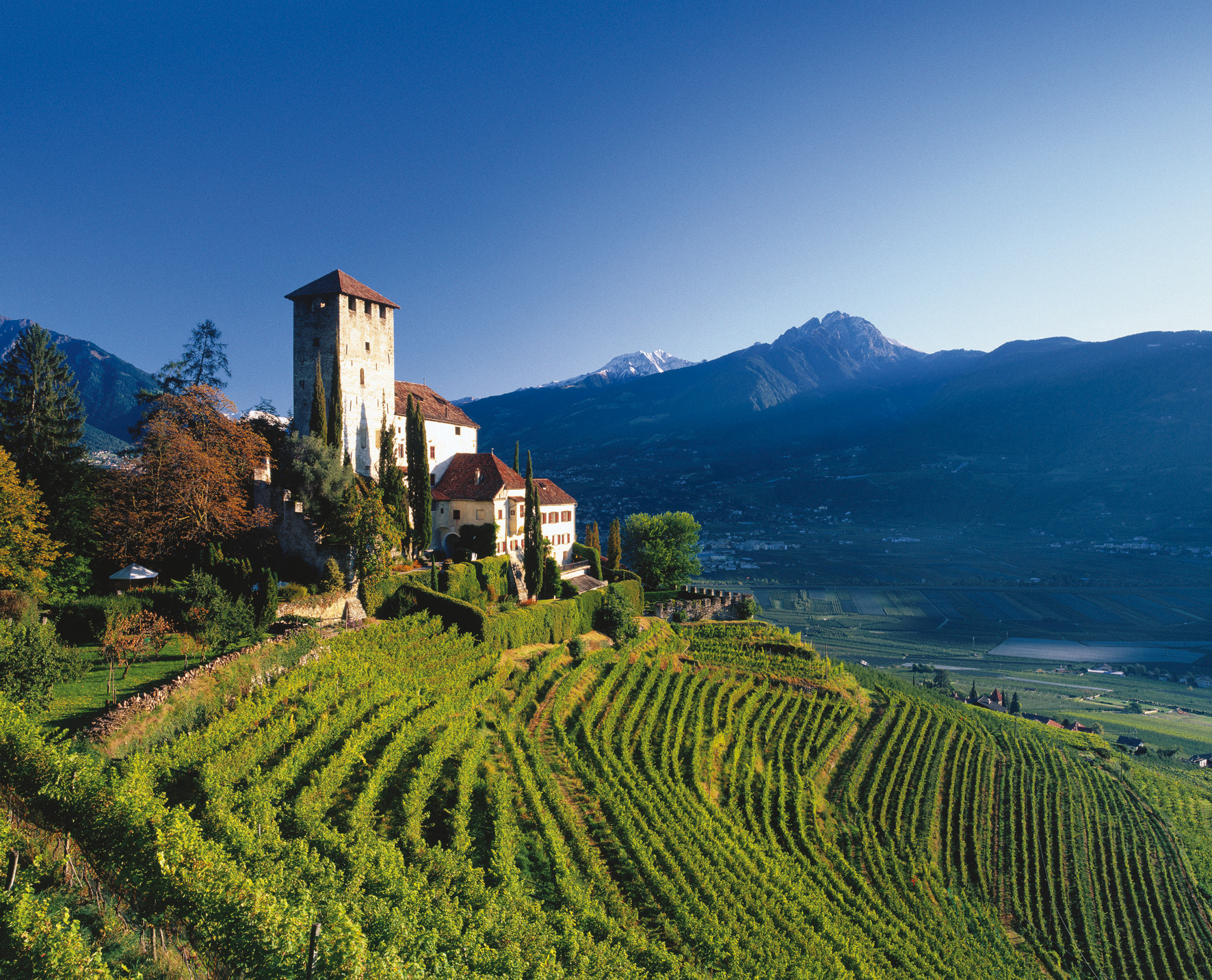 alpine-vineyard