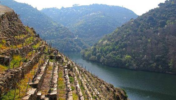 galicia_river_sil_heroic_vineyards