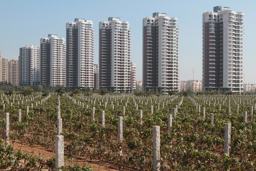 Chinese vineyard and tower blocks