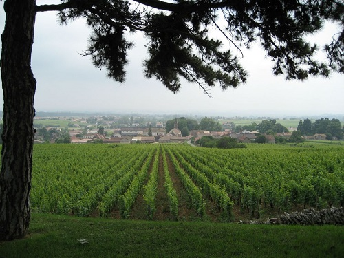 pouilly_fuisse_springtime_view
