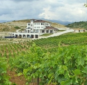 vineyard-winery-vills-melnik