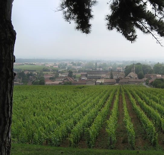 view-pouilly-fuisse-through-vineyard