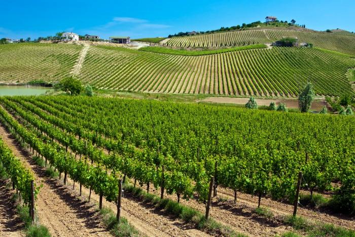 view of abruzzo vineyards